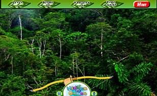 Jeu Forêt amazonienne - Objets cachés