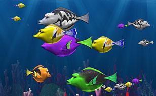 Jeu Fish Munch