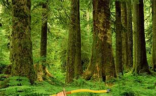 Jeu Forêts sauvages - Cibles cachées