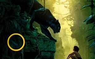 Jeu Le livre de la jungle - Chiffres cachés