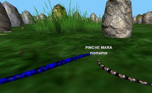 Jeu Snakes3D